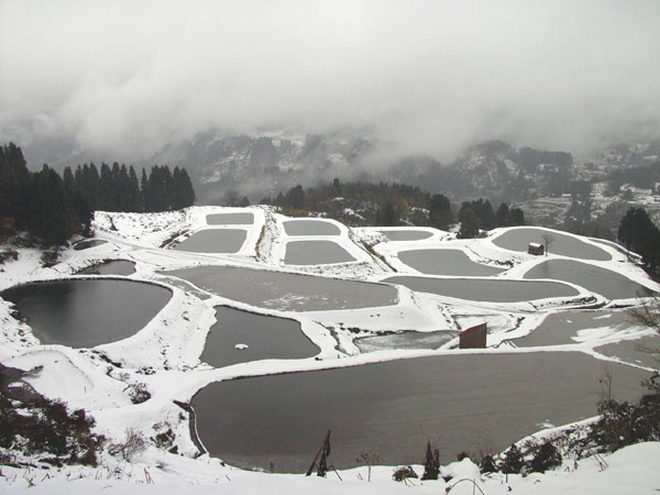  field ponds in winter, empty of Koi stocks from early October until early June