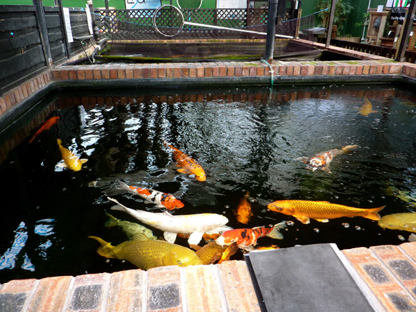 UK Koi Dealers