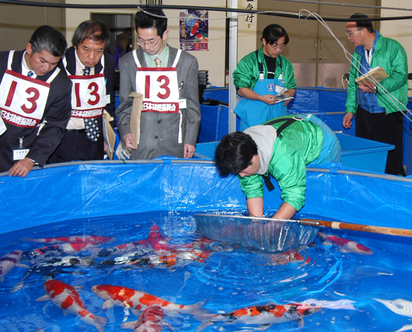 Koi Judges