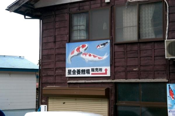 Hoshikin Koi farm