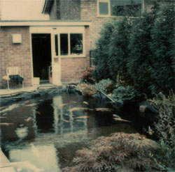 Roland Seal's Koi pond 1973.