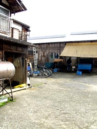 Jinbei Koi farm 1