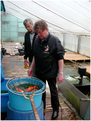 Peter Waddington selecting koi