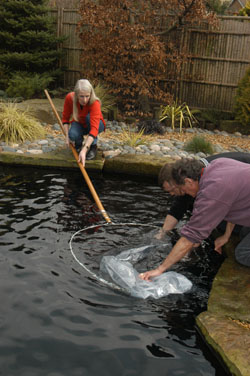 Purpose-made Koi Net