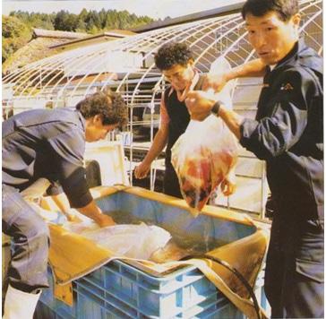 Sakai Fish Farm