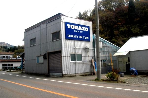 Torazo Koi
