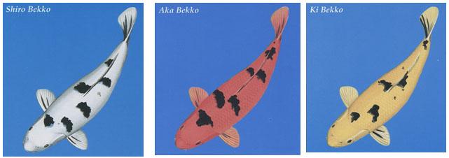 BEKKO - The word Bekko translates as 'tortoise-shell'
