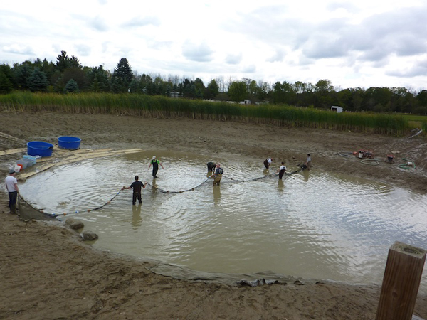 Harvest net was eventually stretched across the mud pond