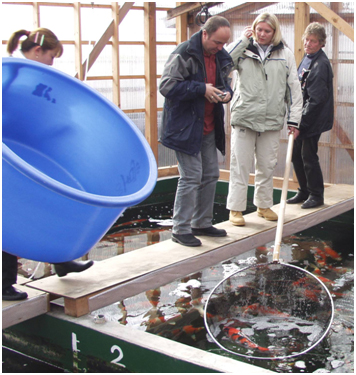 Japanese indoor, heated Koi house used for sales and over-wintering of stocks
