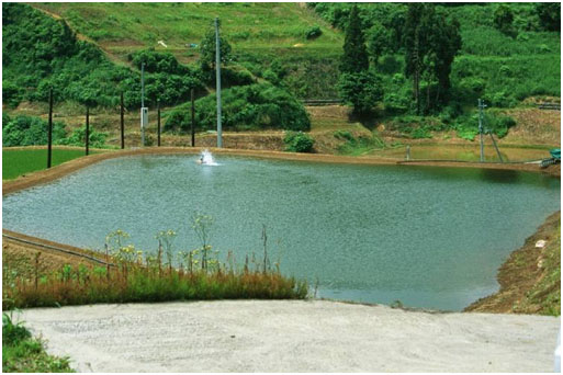 Typical Japanese field pond in summer with supplementary aeration by paddle