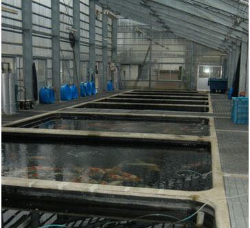 Huge steel and glass house built over the huge ponds which holds many Koi