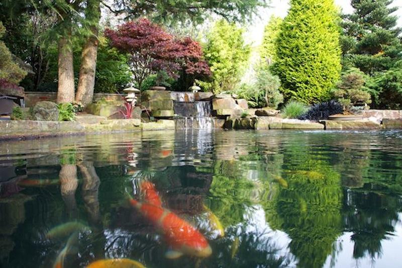 Peter Waddingtons Pond 2