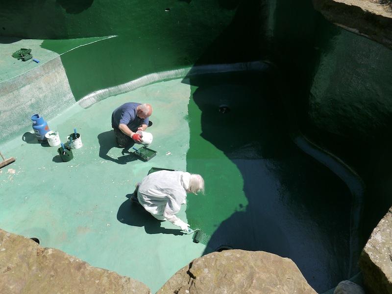 Repairing Koi pond