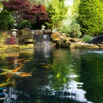 Peter Waddington Koi Pond