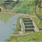 Outdoor koi pond