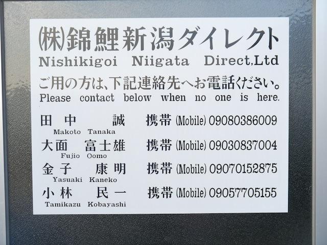 Nishikigoi Niigata Direct (NND) 4