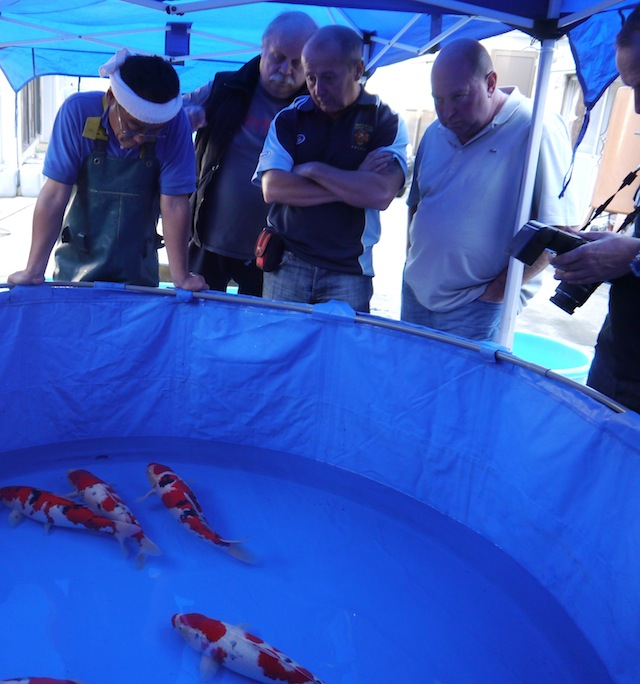 People looking round koi
