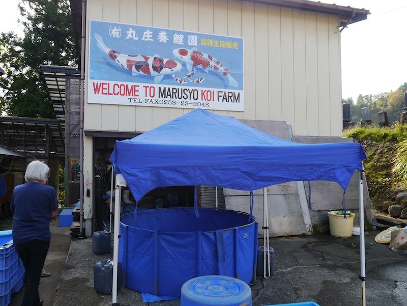 Marusyo in Yomogihira