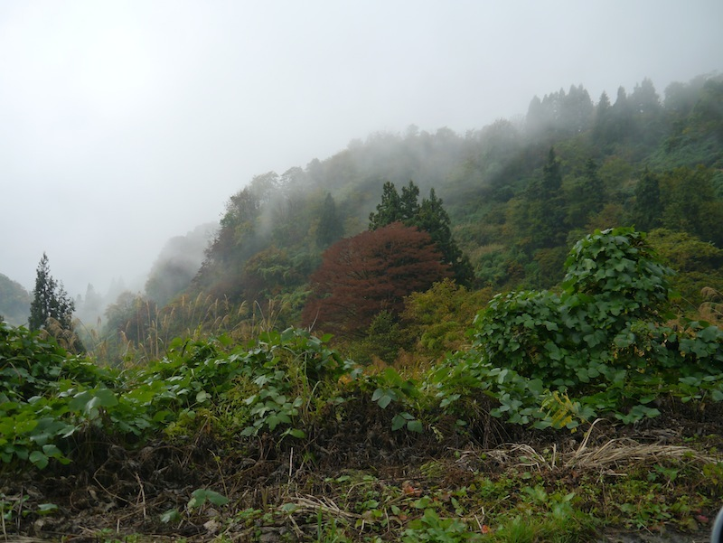Takenokouchi – beautiful
