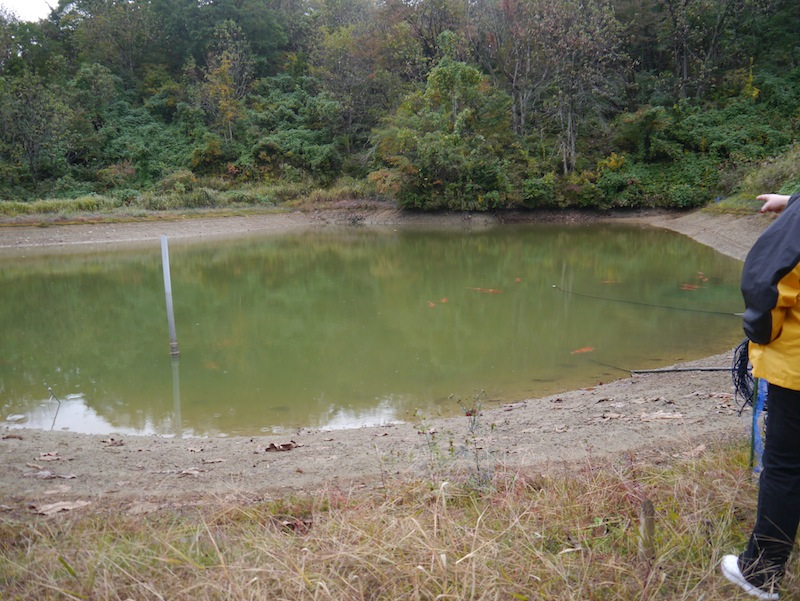 The pond had been partially drained each day for the past five days