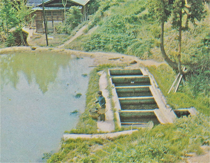This was taken in the early 1960's – note the spawning ropes anchored around the pond perimeter.