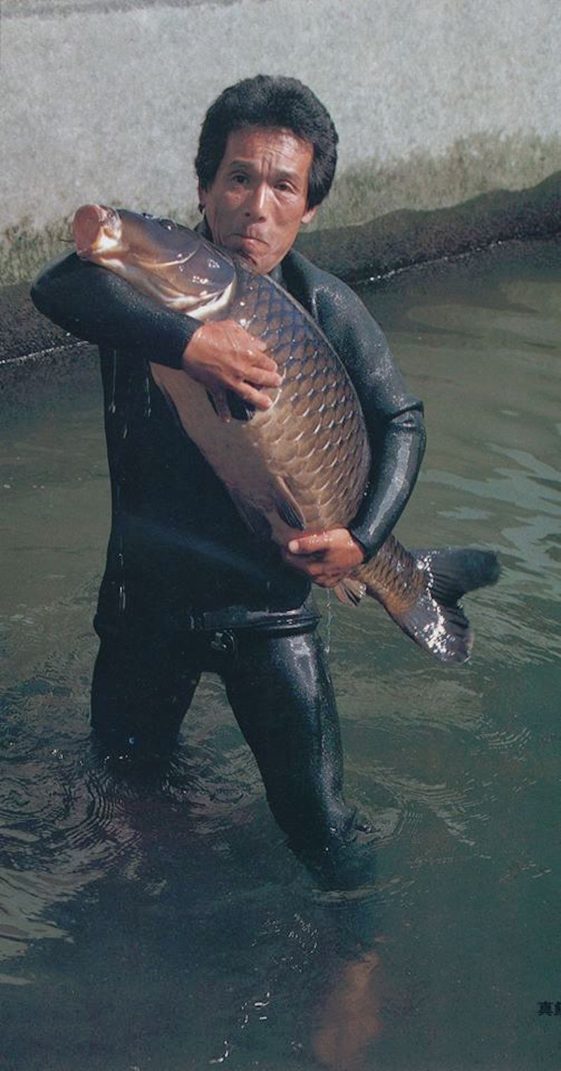 This is a 'pond-grown' version of the original black carp, known in Japan as Magoi.