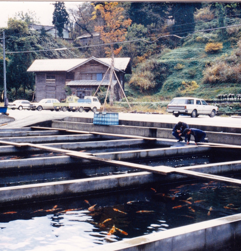 Minoru Mano of Dainichi fame built his original Koi outlet in Minamigoro village in the late 1960's